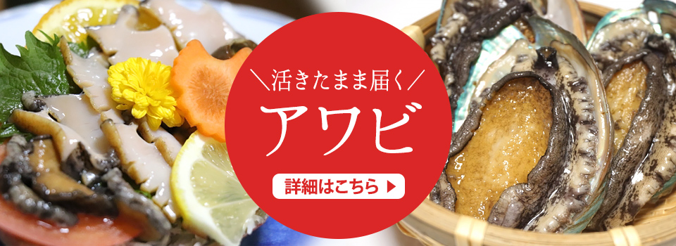 熊本県天草特産 活きアワビ